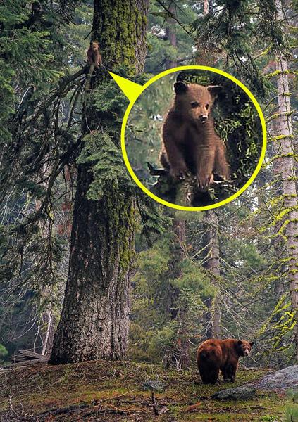 熊急跳树!小熊被偷拍后受惊爬树躲避