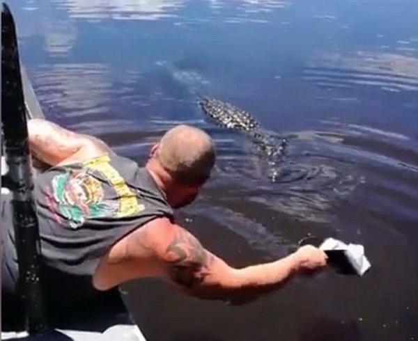 有爱!美导游接近并亲吻野生短吻鳄