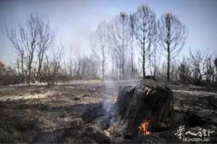意大利火灾频发 将投入500万欧恢复植被