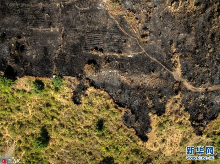 航拍:意大利国家公园火灾后一片焦黑