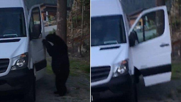 老司机驾到!加黑熊轻松开门跳上车惊呆车主