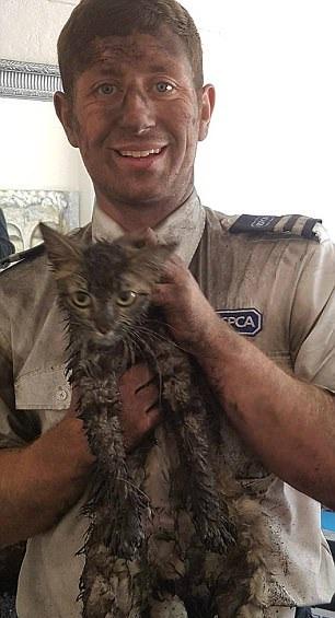 """英小猫被困烟囱4天 获救后变成""""烟熏猫"""""""