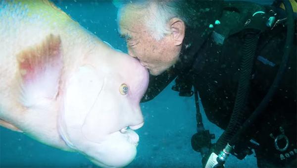 日本潜水员与海底一条大鱼结下25年深厚友谊