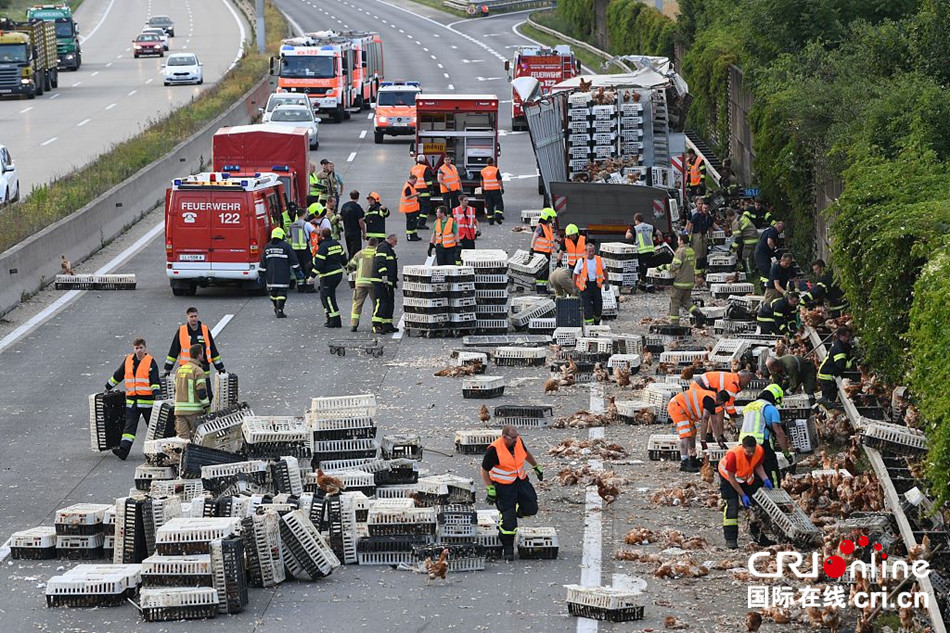 奥地利一货车在高速路出事 车上7000只鸡到处狂奔