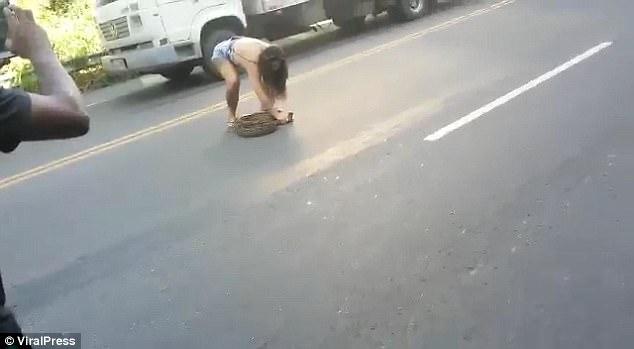 巴西2米长蟒蛇躺路中间堵塞交通被女汉子徒手捉走