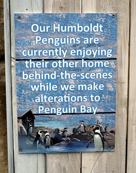 英动物园8只企鹅被狐狸袭击死亡 以改造为由隐瞒