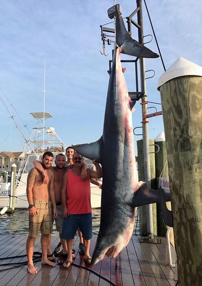 """美渔民与巨型灰鲭鲨""""斗智""""数小时终将其捕获"""